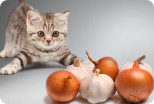 Los-gatos-no-pueden-comer-cebolla