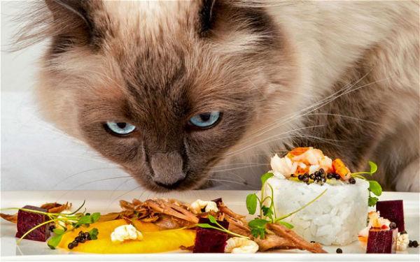 comida_gato