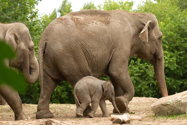 embarazos-animales001