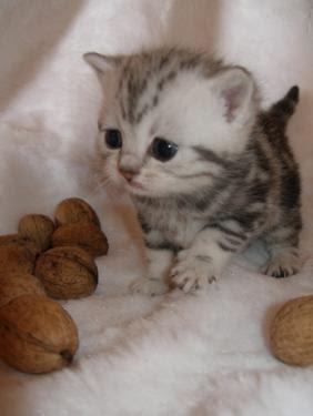 gatito y nueces