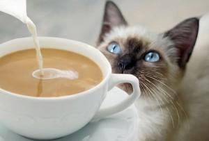 gato-cafe
