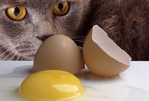 huevo-toxico-gatos
