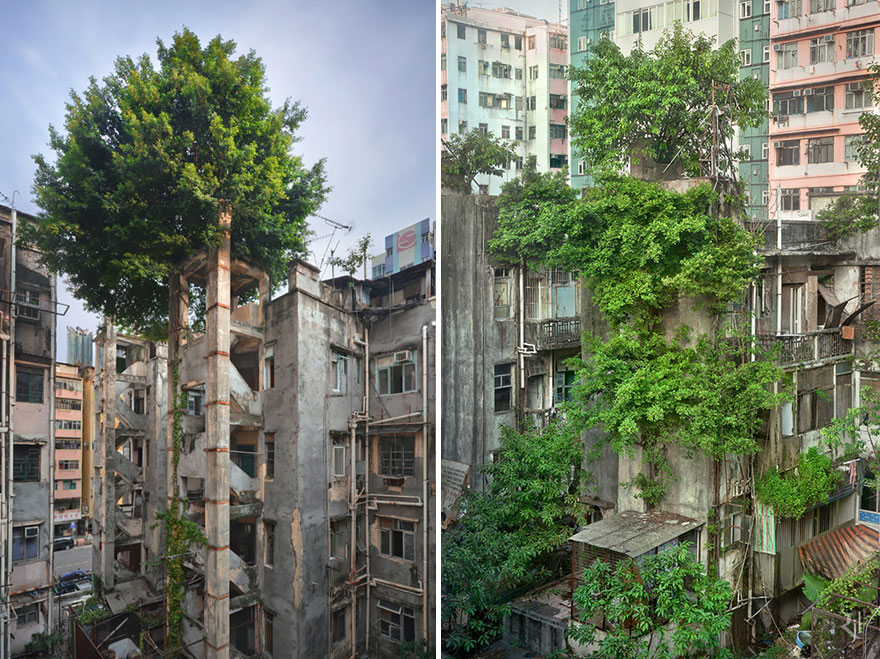 nature-reclaiming-abandoned-places-27