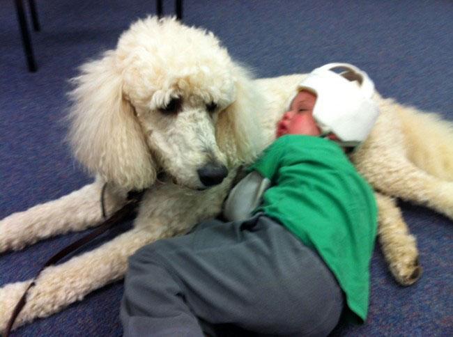 perro-terapia14