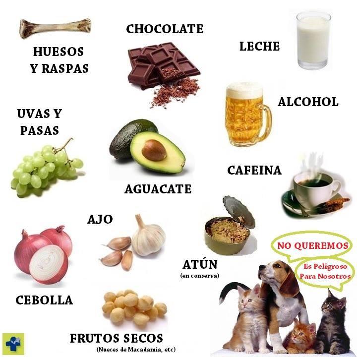 bebidas naturales para quemar grasa del abdomen