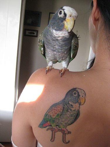 pet-tattoo26