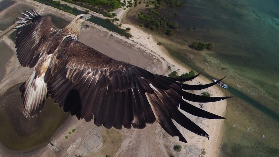 1st-place-dronestagram-eagle1