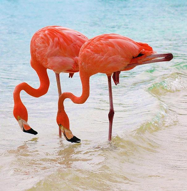 animal-twins-two-similar-lookalikes-221