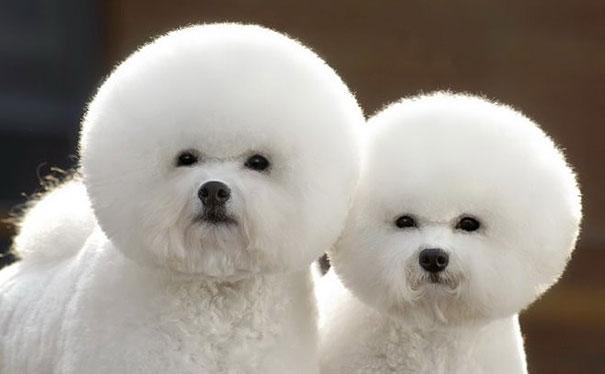 cute-animals-twins-1