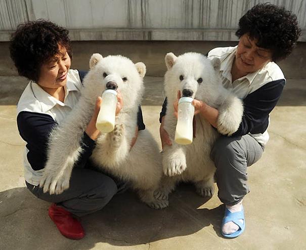 cute-animals-twins-17