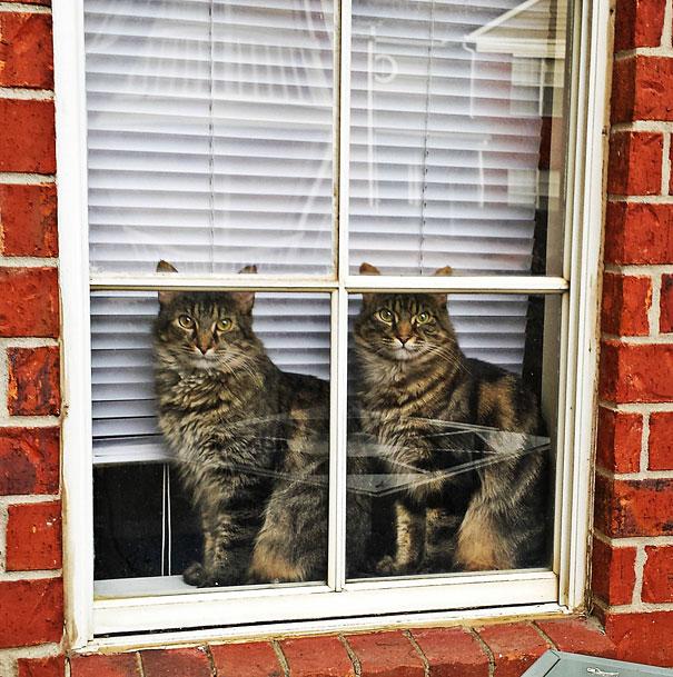 cute-animals-twins-18