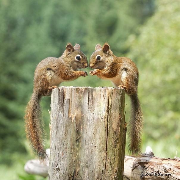 cute-animals-twins-26