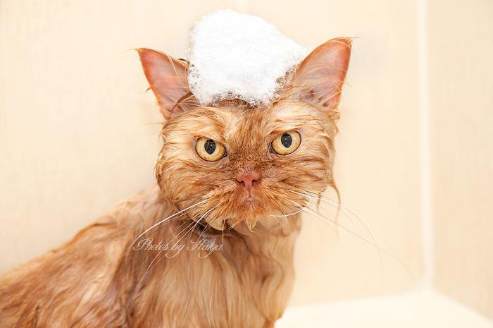 garfi-gato-enfadado11