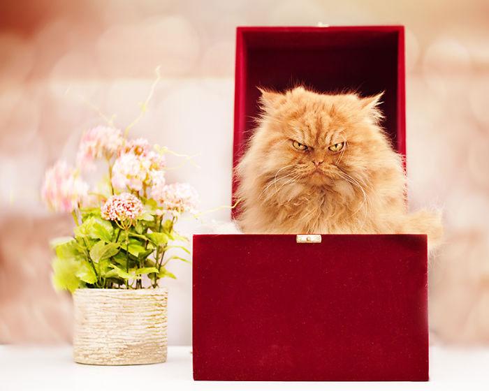 garfi-gato-enfadado13