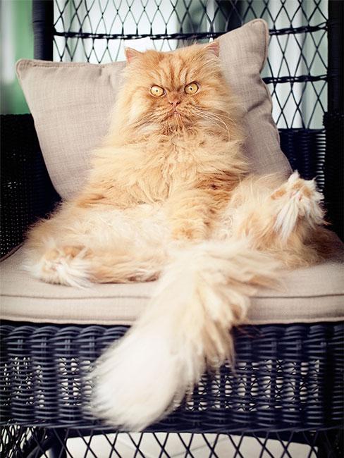 garfi-gato-enfadado14