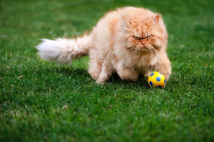 garfi-gato-enfadado15