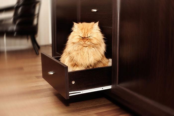 garfi-gato-enfadado2