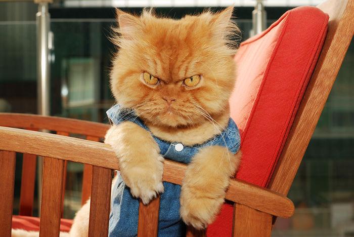 garfi-gato-enfadado7