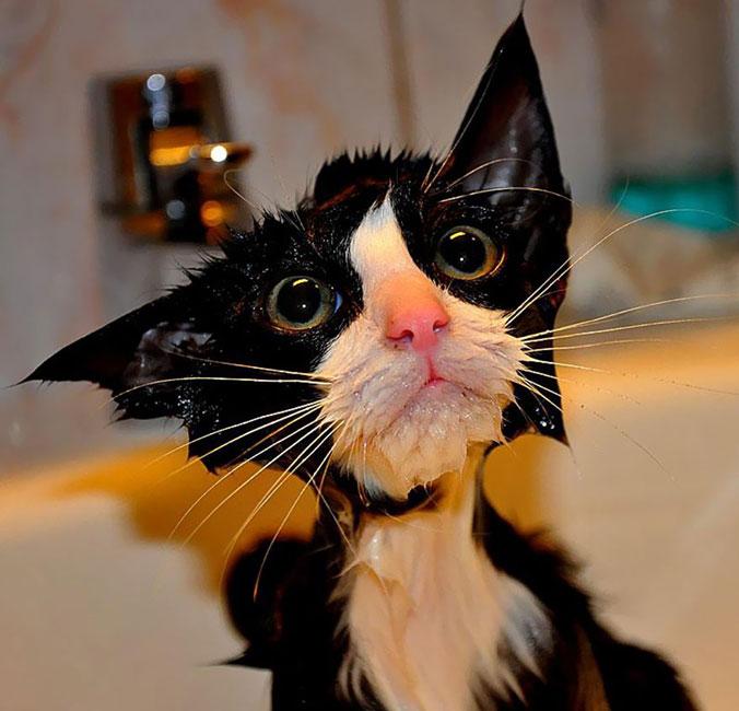 gato-mojado1