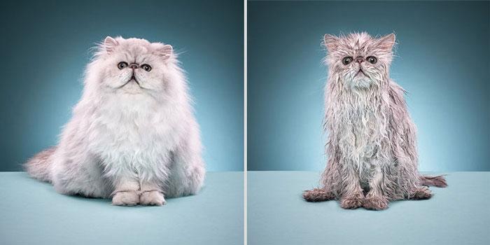 gato-mojado10