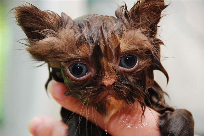 gato-mojado14