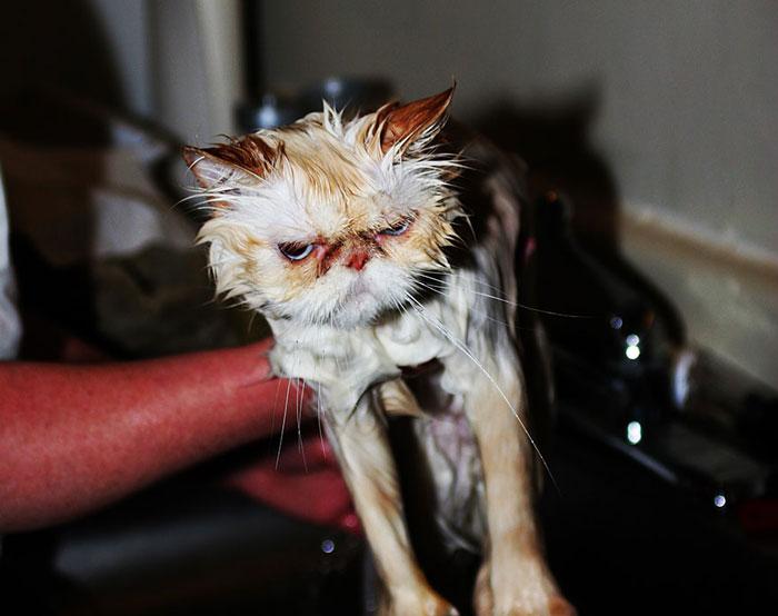 gato-mojado16