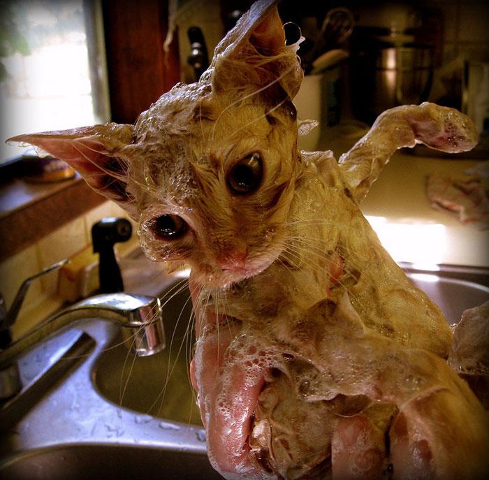 gato-mojado17