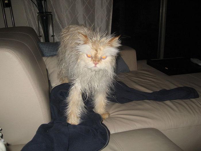 gato-mojado20