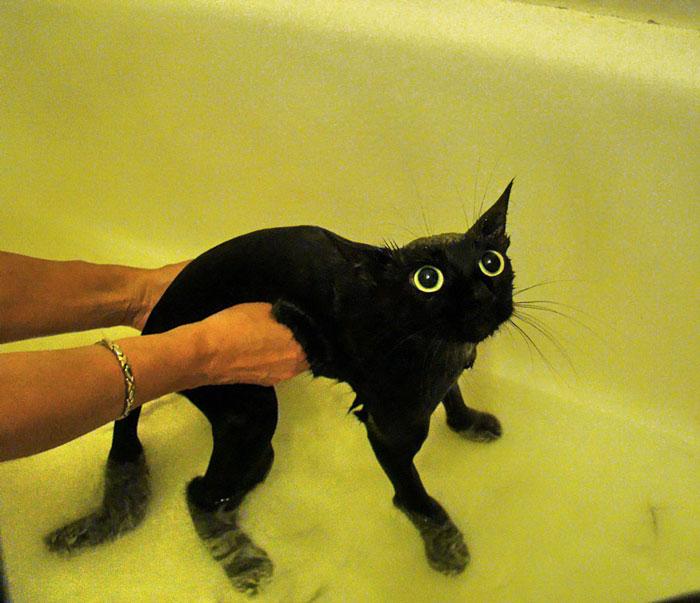 gato-mojado22