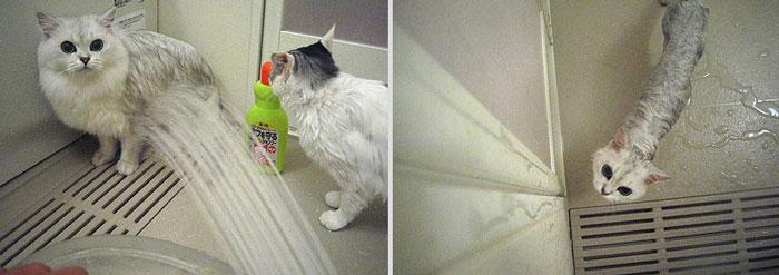 gato-mojado4