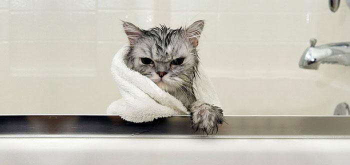 gato-mojado5