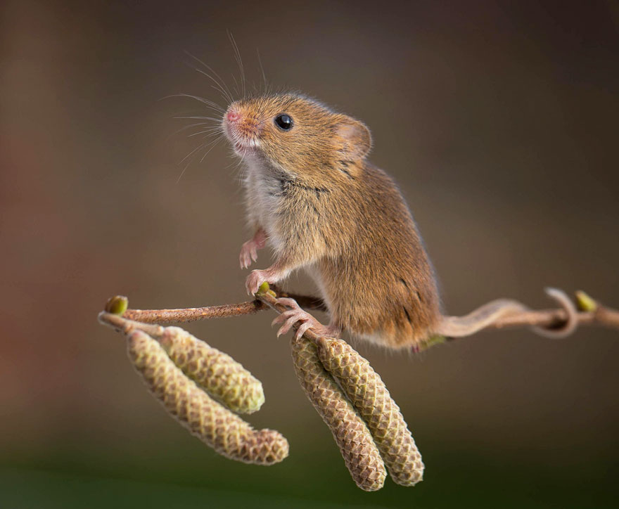 wild-mouse-photography-1