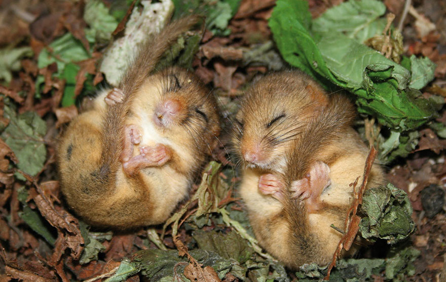 wild-mouse-photography-15