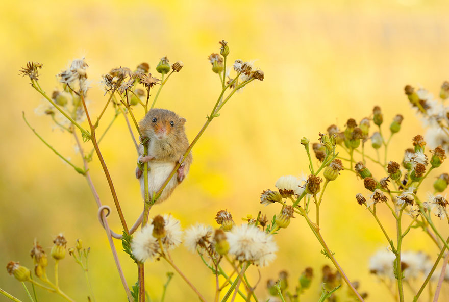 wild-mouse-photography-31 (1)