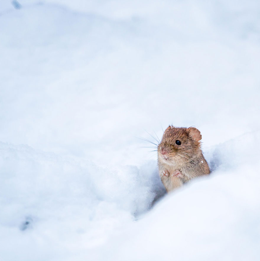 wild-mouse-photography-7