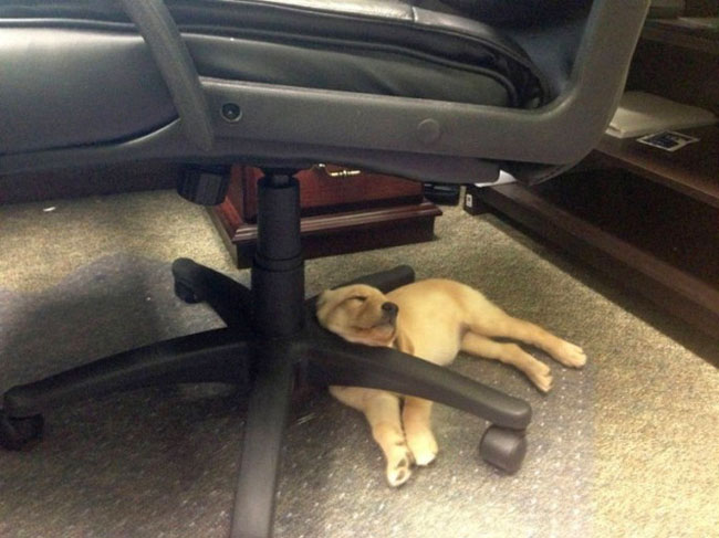 cachorro-duerme-raro12