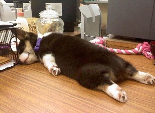 cachorro-duerme-raro14