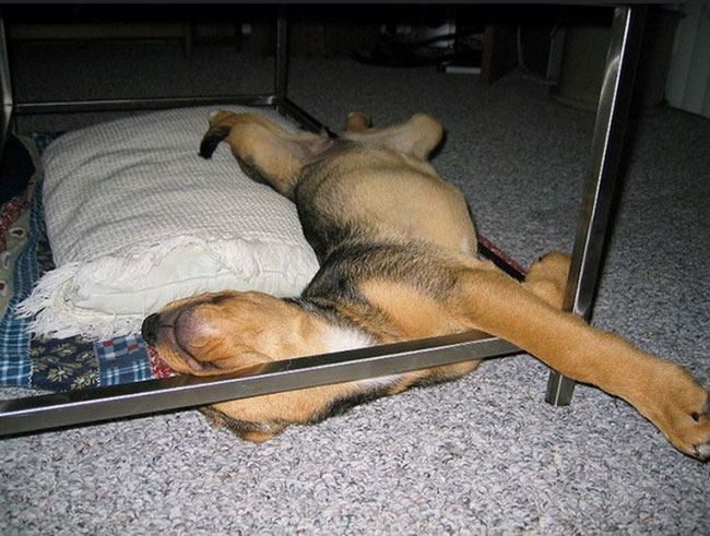 cachorro-duerme-raro15
