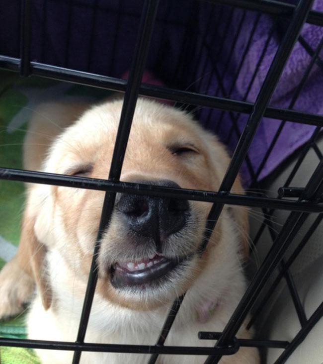 cachorro-duerme-raro17