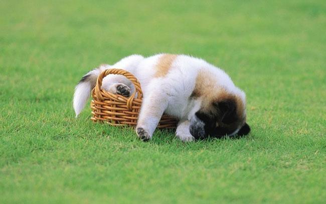 cachorro-duerme-raro5