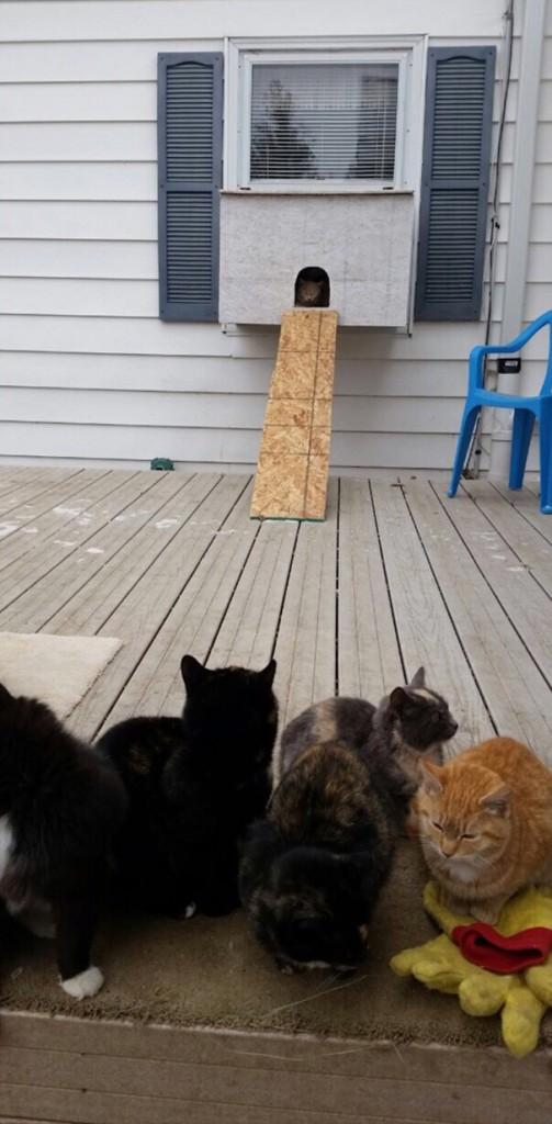 cataquarium-stray-cat-shelter-1