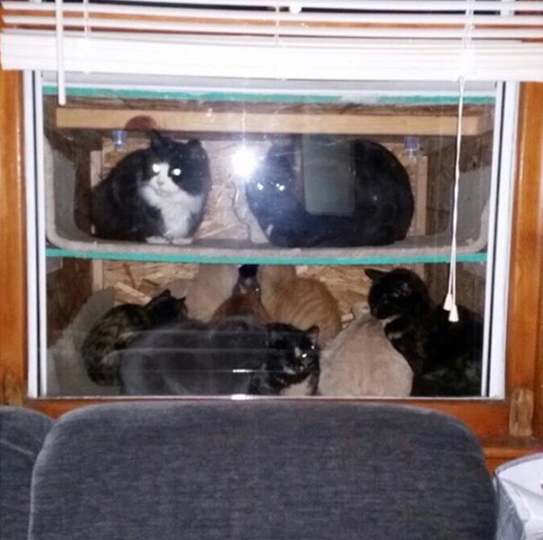 cataquarium-stray-cat-shelter-2