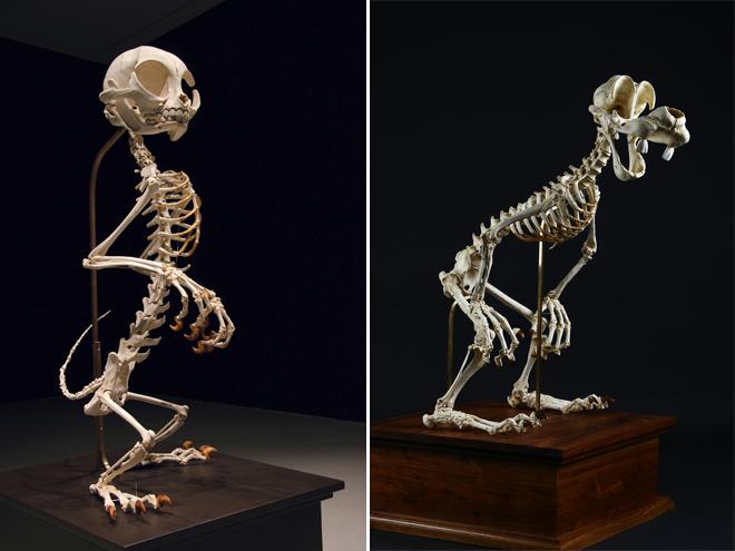 esqueletos-animados-3