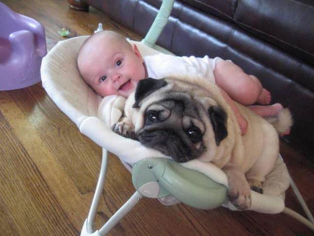 peque-perro-mejor-amigo1