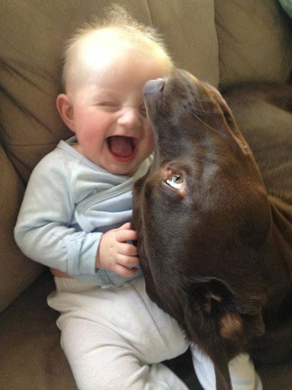 peque-perro-mejor-amigo9