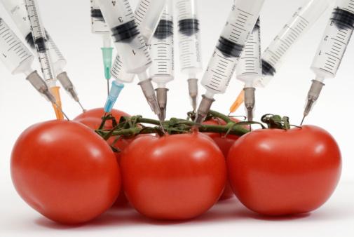 Syringe needles pushed into tomatoes