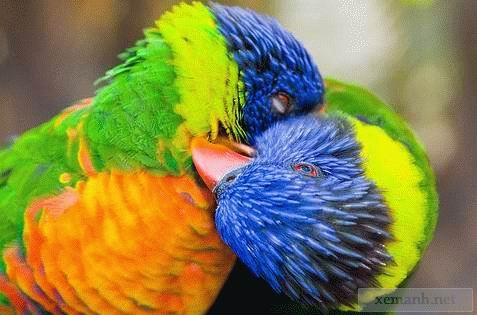 animals_in_love_03