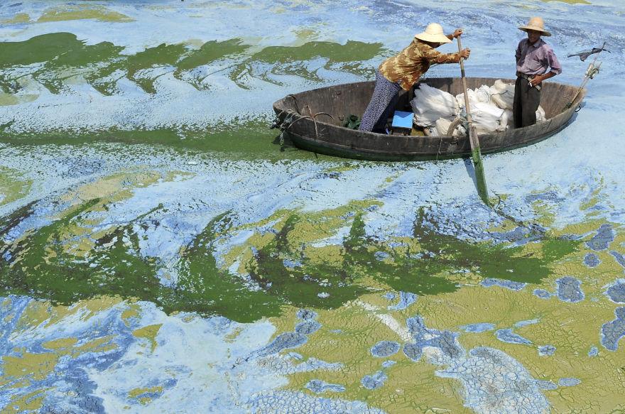 Fishermen row a boat in the algae-filled Chaohu Lake in Hefei, Anhui province