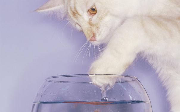 cat-water-cats-animal-752780-2560x1600__605