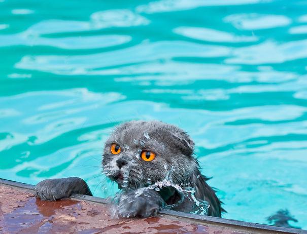 cats-water-wet-841406-1024x782__605